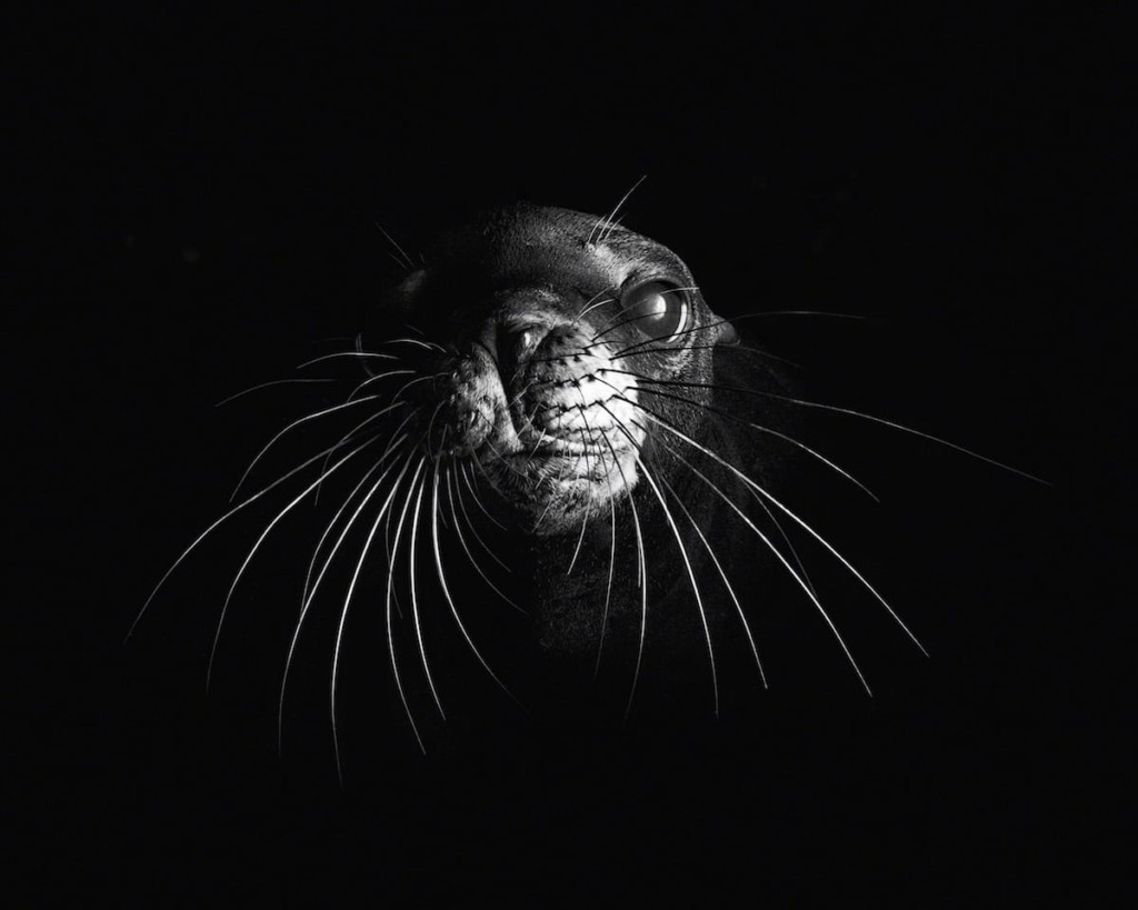 'Temporary Serenity of a Sea Lion Pup' © Will Clark, United Kingdom, Shortlist, Open, Wildlife (Open competition), 2018 Sony World Photography Awards